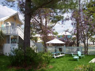 Seagrove Beach house photo - Springtime @ 'Banana Cabana': Our Wisteria In Full Bloom!