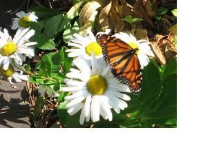 New Seabury house photo - Garden visitors, flowers, birds, butterflys & more