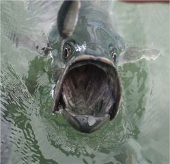 Marathon condo photo - Feed the tarpon right out front or at world famous Robbie's