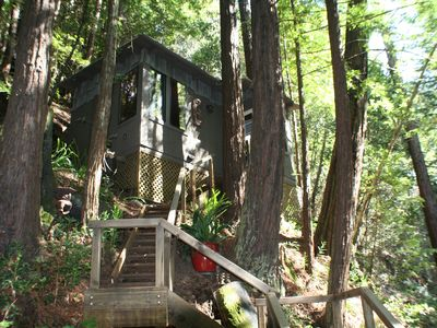 Littlehouse in the Redwoods
