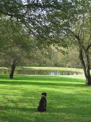 Middlefield house photo - View of Pond through the orchard