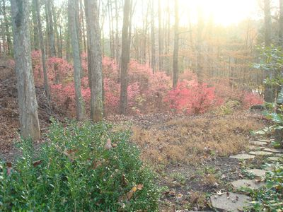 This is fire bushes in late November at the lakehouse