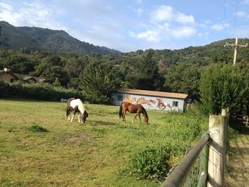 Carmel Valley studio rental - Take your horse on holiday! Also, hiking in heaven!