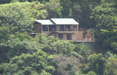 "House set amidst ""Rainforest Preserve"""