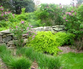 Chilmark cottage photo - The Old Stone walls and Spring Gardens with Lilacs in Bloom.