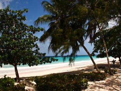 Many trees dot the Miami coastline with its powdery beaches.