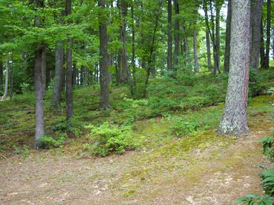 Berkeley Springs chalet rental - WOODS