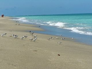 Hutchinson Island condo photo - Over One Mile of Private Beach Front Access on the Ocean