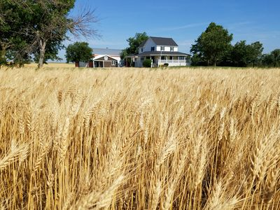 Kansas Beach House your home to witness the golden WAVES of wheat.