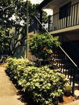 LOVELY 1 BR COURTYARD CONDO ON QUIET BEACH-PERFECT FOR SMALL FAMILY