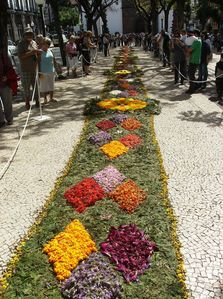 Funchal apartment rental - Flower festival- funchal centre