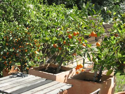 California weather gives us lots of citrus—help yourself!