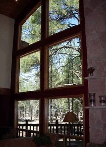 Amazing windows to the Ponderosa Pine's