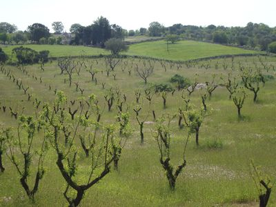 Ostuni farmhouse rental - Countryside at Your Doorstep