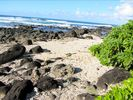 Haleiwa Cottage Rental Picture