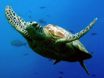 These Ancient Sea Turtles are Just Below the Suite!