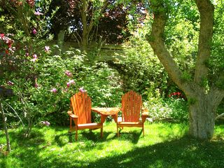 Mitchell cottage photo - Relaxing in under the old Apple Trees