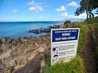 Napili condo photo - Maui's most accessible Green Sea Turtle Cleaning Station is right in front!