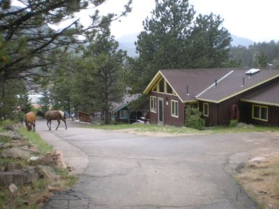 Elk in front of Ada's and Mabel's Cabin.