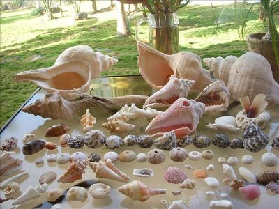Playa del Secreto , a day of shell hunting