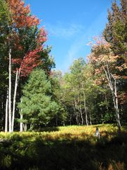 View from yard as fall comes - Claryville cabin vacation rental photo