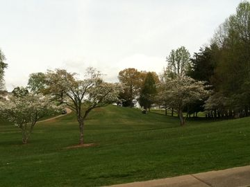 Spring at the local golf course and the dogwoods are in bloom