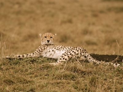 image for Mara Enkipai House - Enjoy Your Safari In Complete Privacy In Maasai Mara
