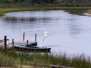 East Quogue house photo - An egret taking flight from the dock.