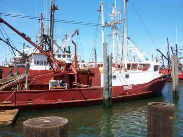Here's how LBI gets such fresh local seafood: the fleet docks in Barnegat Light!