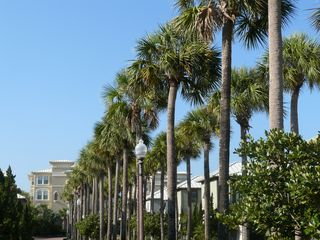 Seacrest Beach villa photo - palm lined entrace into Sunset Beach community