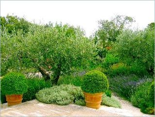 Gordes house photo - Garden.