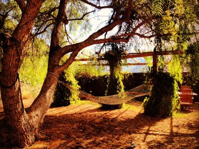 Lounge in the hammock under an ancient pepper tree