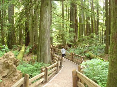 A peaceful walk through Cathedral Grove Old Growth Forest