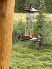 Fairplay cabin photo - If you stand very still, the humming birds will fly right up to you.