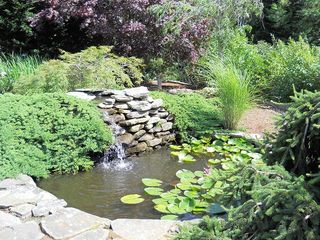 Chatham house photo - Koi Pond and Waterfall in Japanese Garden