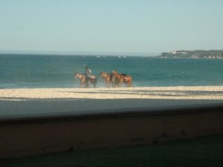 San Jose del Cabo condo photo - Watch the horses go by - view from patio