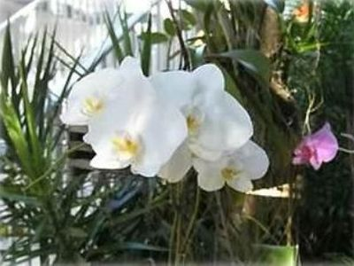 Orchids surround the entrance to Bayside