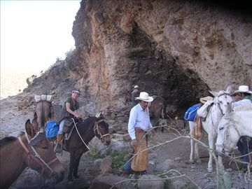 Take a mule trip to see cave paintings with our friend Trudi