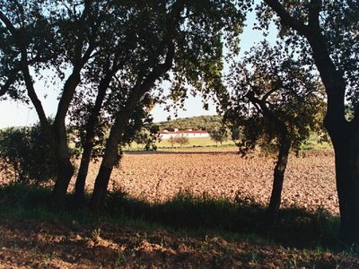 Estremoz cottage rental - Monte Alamo from the distance