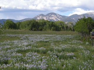 Taos house photo - Wild Iris beside the road on the drive into Taos