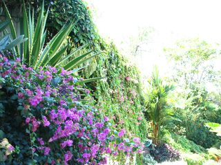 Manuel Antonio villa photo - Wall of flowers cascading down the driveway of The Villa!