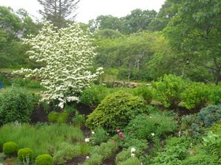 Chilmark house photo - Dogwood, lavender and peonies to enjoy.