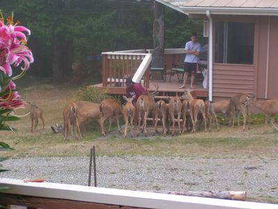 Guests feeding the deer