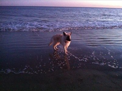 My puppy at beach:-)