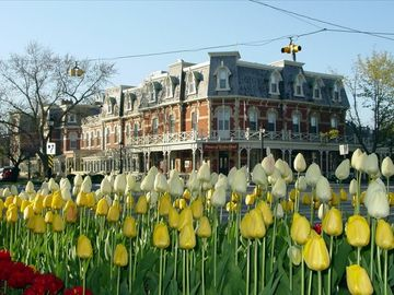 The sectacular flower display in town every spring