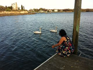 Feed the pair of Swans from the dock