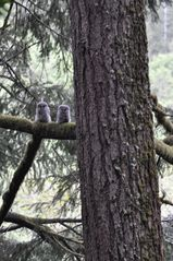 Coos Bay house photo - Baby Owls