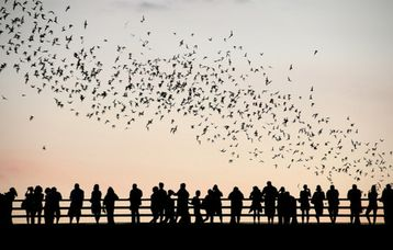 Watch the bats emerge at sunset from Congress Avenue bridge over Lady Bird Lake.