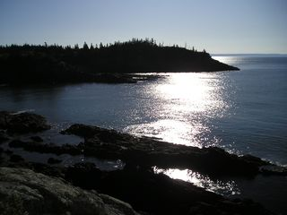Lubec cottage photo - Bird at the beautiful Boot Head Preserve a few miles away.