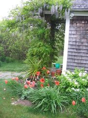 Chilmark house photo - Early summer blooms surround the house